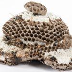 Hornets Nest